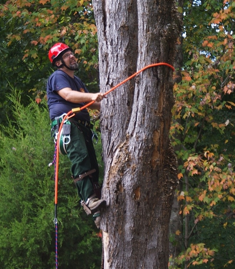 tree-services-tree-removal