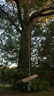 Willow Oak Swing