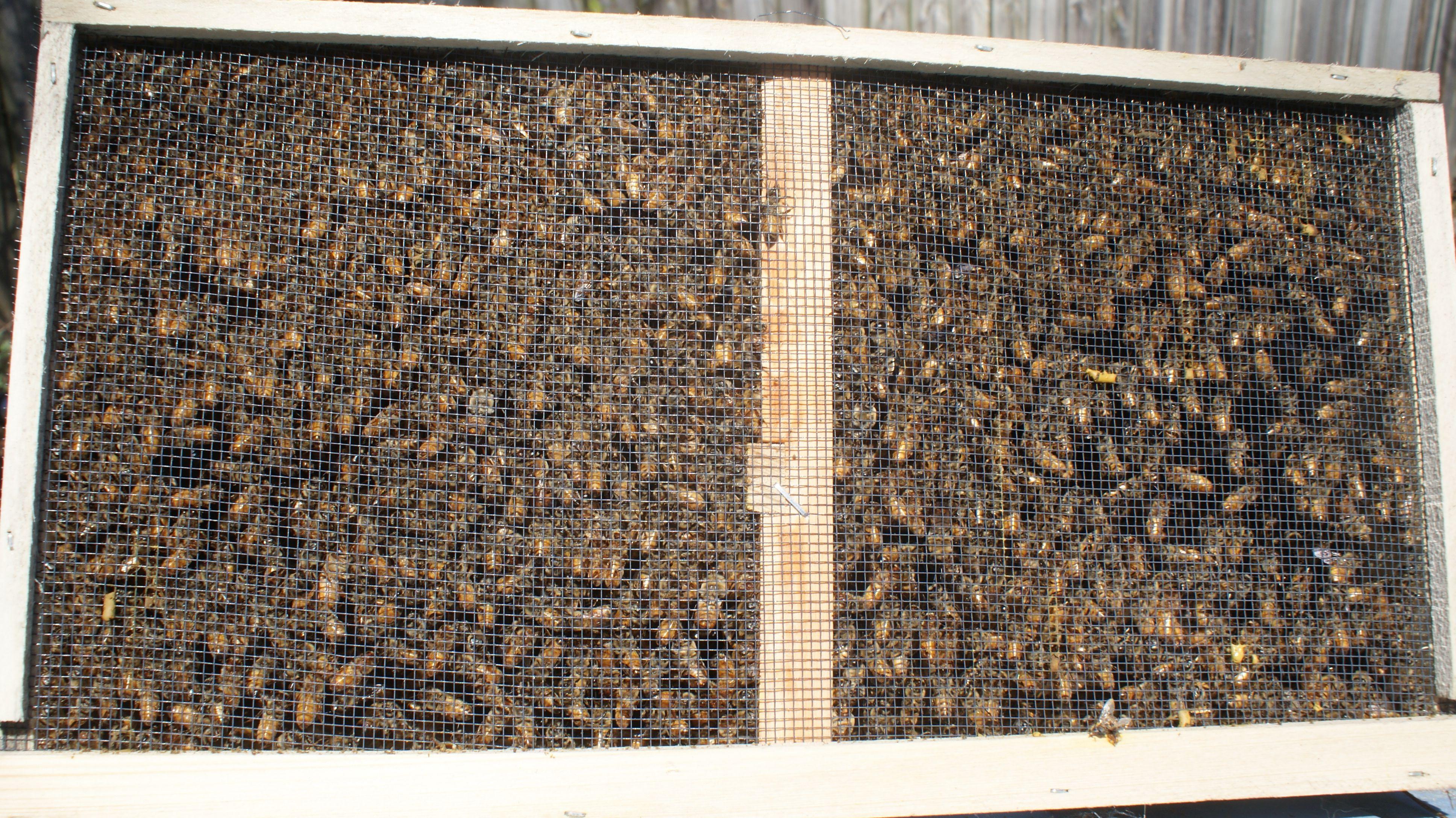 bee-package