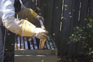 Beekeeping Brood Frame