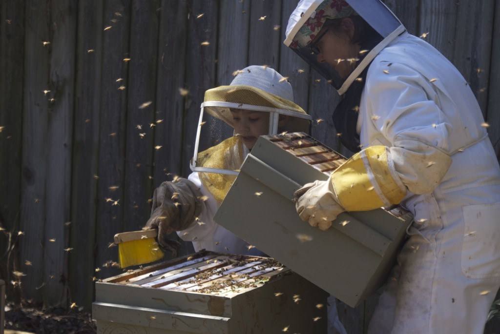Beekeeping Honey Super