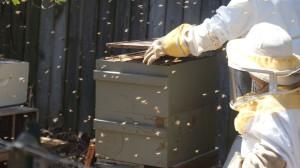 Bee Hive Top Board