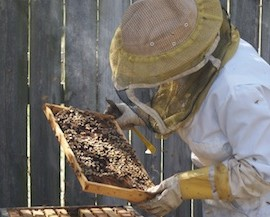 Bee Hive Brood Check