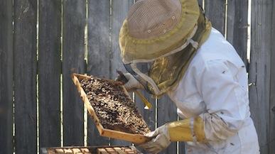 Bee Hive Brood Check