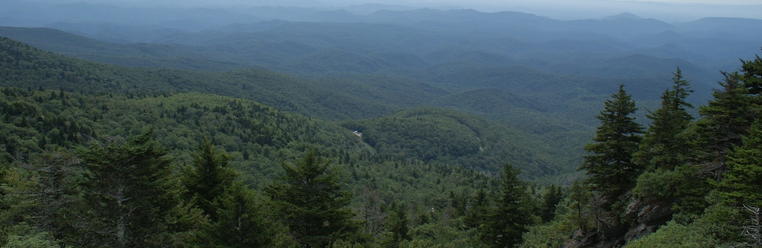 North Carolina Consulting Forester Services
