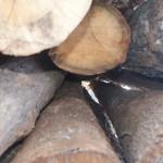 Round Log Timber Sales