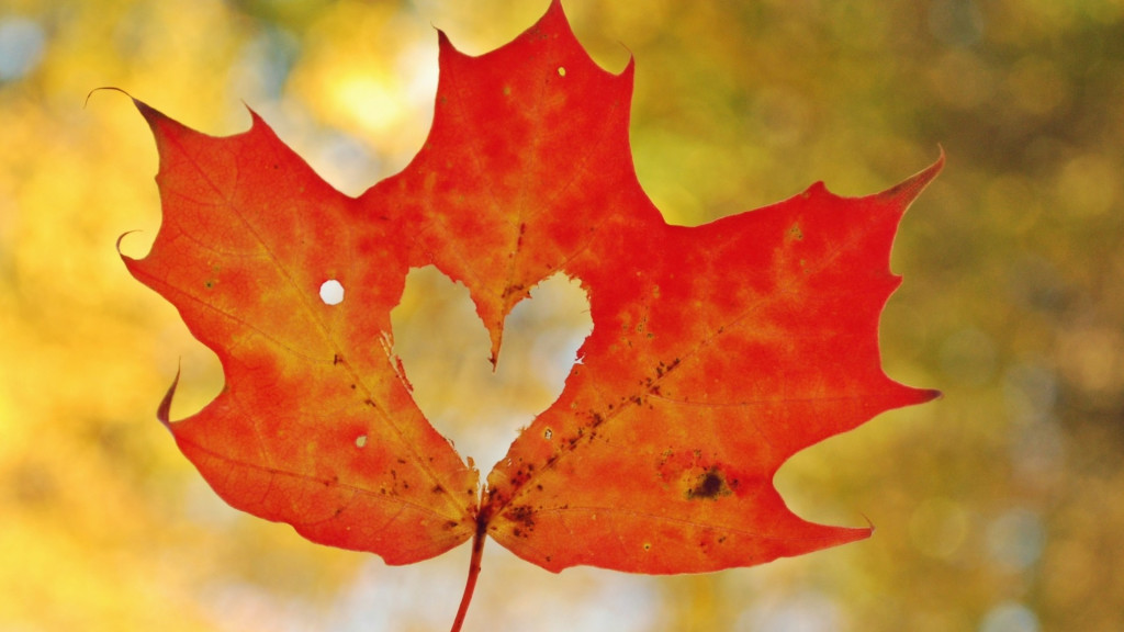 Grateful Trees Bees Blog Keep Fall Leaves On Your Property