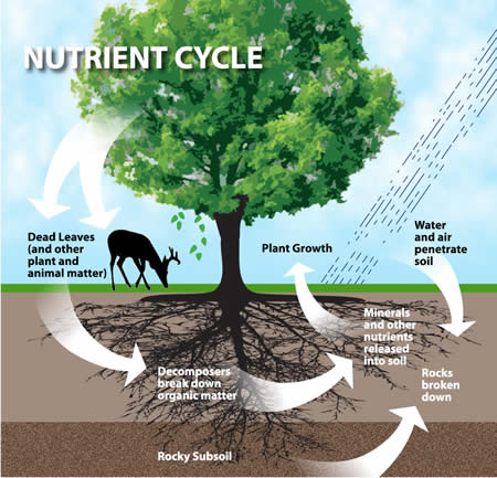 nutrient-cycle