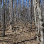 forest's sequester carbon